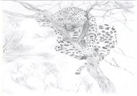 """""""Леопард на дереве"""", автор Sherbanova Irina"""