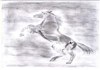 """""""Конь на дыбах"""", автор Sherbanova Irina"""