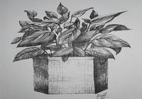 """""""Комнатный цветок"""", автор Ирэн"""