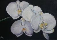 """""""Орхидея Лиа."""", автор Лия Чащина"""