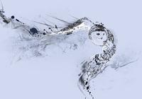 """""""Полет совы. 3 цветовой вариант на серо-голубом фоне"""", автор Миронова Наталия"""