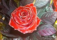 """""""Цветок роза"""", автор Sergey"""